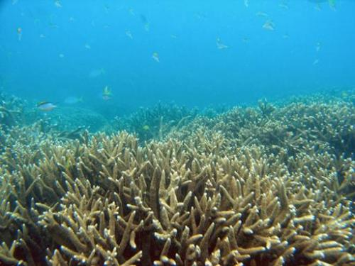 A barren section of Australia's Great Barrier Reef, which scientists have warned could be killed by global warming within decade