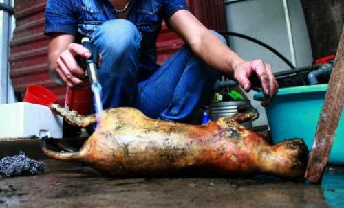 A cook uses a torch to burn the fur off a slaughtered cat at a restaurant in Hanoi on May 12, 2014