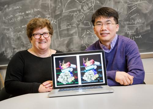 Advanced techniques yield new insights into ribosome self-assembly