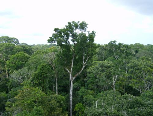 Amazon Inhales More Carbon than It Emits, NASA Finds