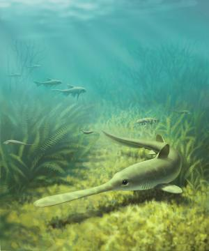 Ancient sharks reared young in prehistoric river-delta nursery
