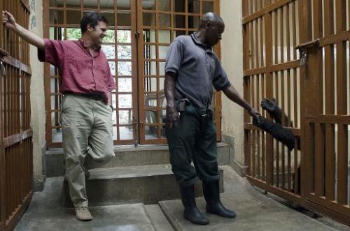 An orphaned mountain gorilla extends his hand to a park ranger as Emmanuel De Merode (L) watches, Virunga National Park in Ruman