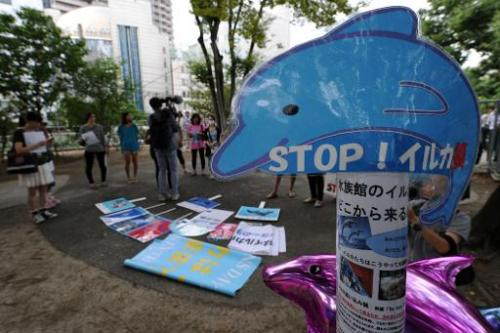 A placard reading 'Stop! Dolphin hunt' is seen during a protest in central Tokyo against the annual dolphin hunt in Taiji, on Au