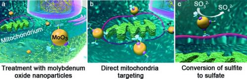 Artificial enzyme mimics the natural detoxification mechanism in liver cells