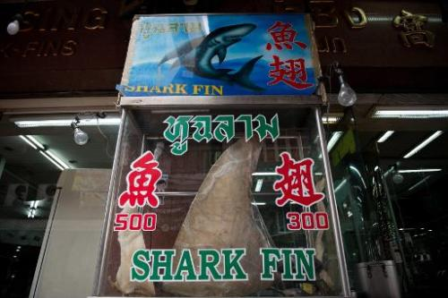 A shark fin is displayed in front of a restaurant in the Chinatown area of Bangkok on March 6, 2013