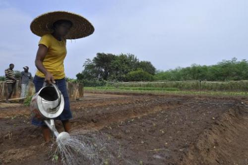 A woman waters plants at the Centre Songhai, an organic farm in Porto Novo, Benin, on January 30, 2014