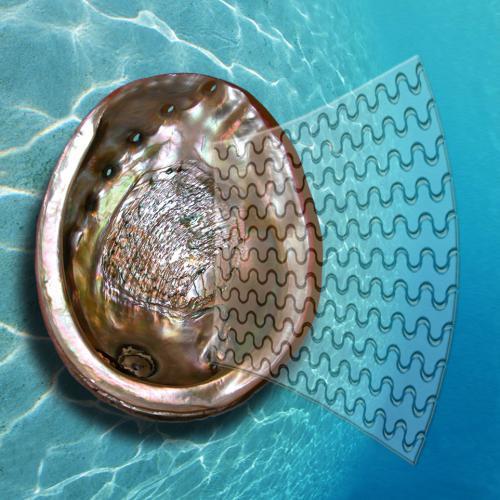 Mollusc shells inspire super-glass
