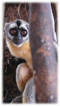 Biologist's research helps protect rainforest monkey from illegal hunting