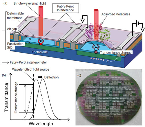 Biosensor based on a microelectromechanical system integrated with a photodetector
