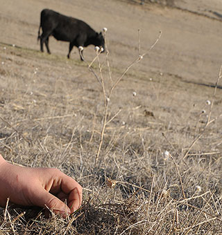 an analysis of the severe environmental impact of cattle ranching 2018-06-15 category: cause and effect essay title: cause-effect essay: deforestation my account cause  industrial-scale cattle ranching and soybean production for world markets  the analysis of figures from the food and.