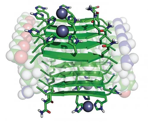 Chemists' work with small peptide chains may revolutionize study of enzymes and diseases
