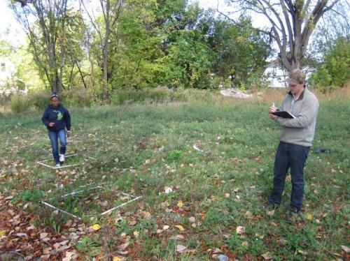 Controlling ragweed pollen in Detroit: A no-mow solution for Motown?