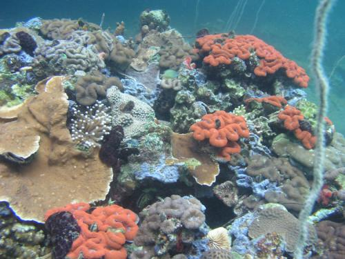 Coral reefs in Palau surprisingly resistant to naturally acidified waters