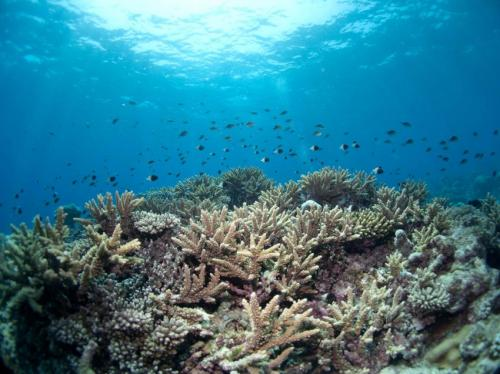 Coral reefs of the Mozambique Channel a leading candidate for saving marine diversity