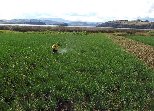 CSIRO releases Spanish version of free pesticide risk tool