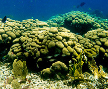 Degraded coral reefs will threaten the livelihoods of fishermen