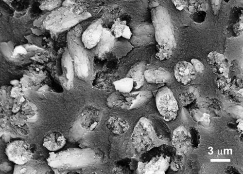 Deposits of Phosphorites Could Be Geological Signpost of Life