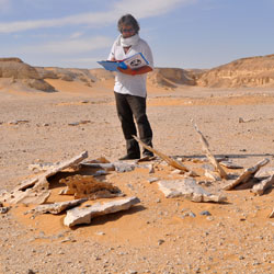 Discovering the artists of the Eastern Sahara