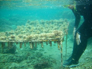 Dissolving the future of coral reefs