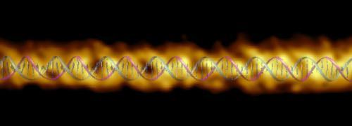 DNA double helix measurements