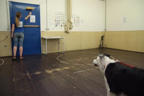 Dog watch: How attention changes in the course of a dog's life