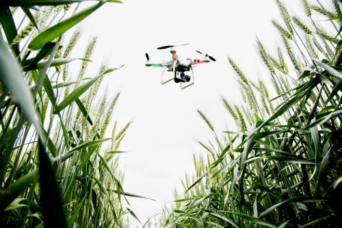 Drones give farmers an eye in the sky to check on crop progress