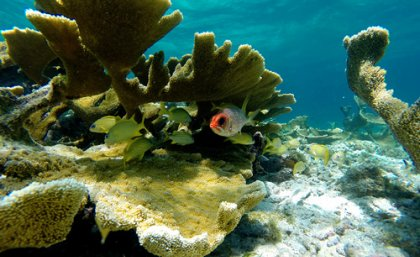 Dying coral reefs threaten the livelihood of millions