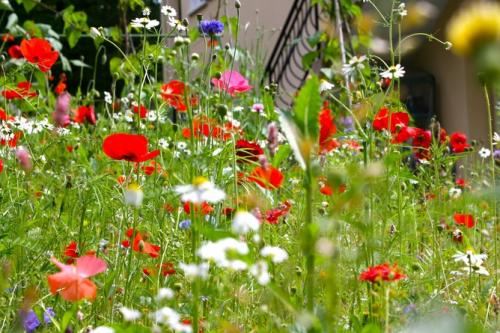 Ecological benefits of gardening wildflowers