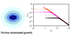 Elucidating optimal biological tissue shape during growth
