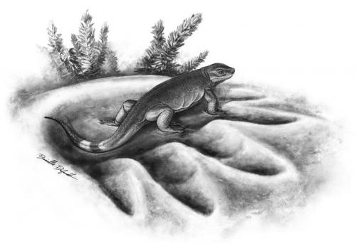 Earliest ancestor of land herbivores discovered