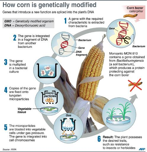Even though most processed foods now contain at least one genetically modified ingredient, there's no national requirement in th