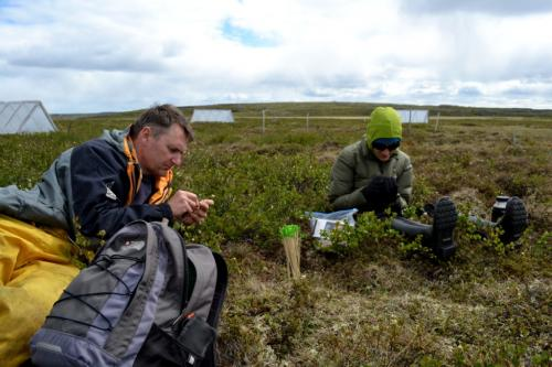 Evergreens restrict Arctic tundra responses to climate change