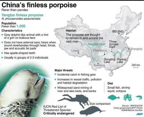 Factfile on China's finless porpoise