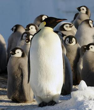 Finding elusive emperor penguins
