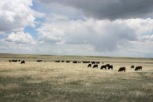 Finding long-term links between weather and cattle production