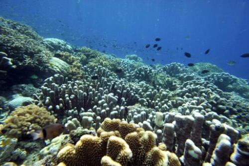 Fish swim in the coral reef of Bunaken Island national marine park in northern Sulawesi on May 14, 2009