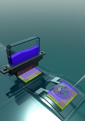 Flexible Bio-Field Effect Transistor proof of concept