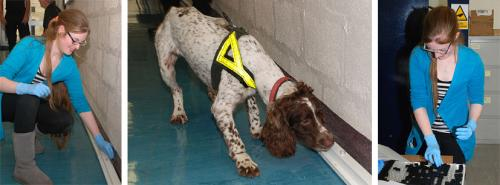 Forensics research to make cadaver dogs more efficient