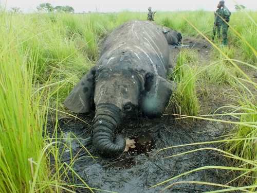 Garamba National Park under attack from armed poachers in DRC