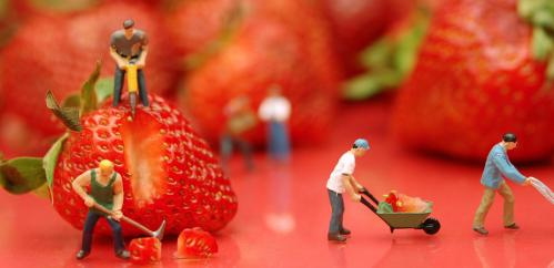 Genetics link found in search for sweet strawberries
