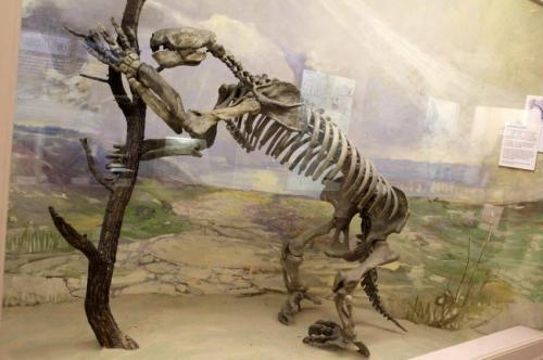 giant sloth