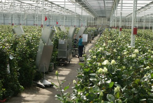 GWorkS-model simulates crop operations in greenhouses