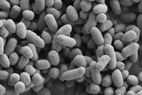 How bacteria communicate with us to build a special relationship