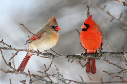 How do birds survive storms and other harsh weather?