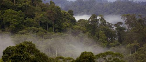 Incentives needed before deforestation reduction can be successful