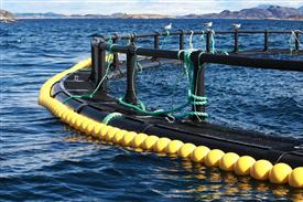 Increased use of medicines in Norwegian fish farming