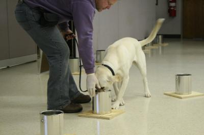 IUPUI study reveals how dogs detect explosives, offers new training recommendations