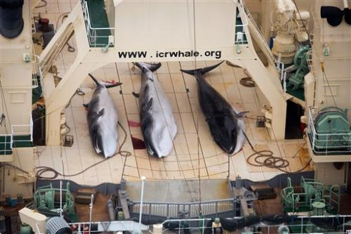 Japan whaling future in doubt after court ruling