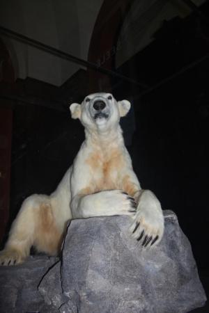 Knut the polar bear's medical legacy