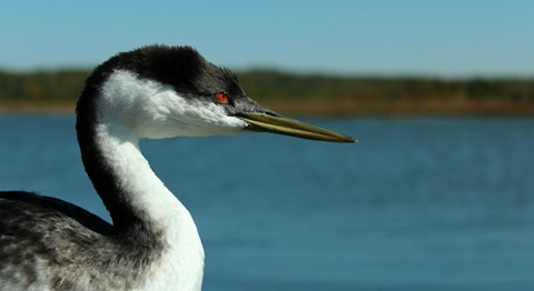 Limiting lake development key to preserving water birds